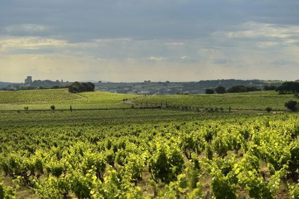 Chateauneuf_482copie©EPerrin-2