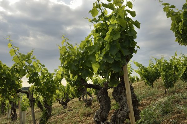 Chateauneuf_488copie©EPerrin-2