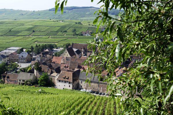 Dopff-Irion_Vineyards-Les-Amandiers