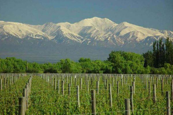 Mountain-Vineyard-2
