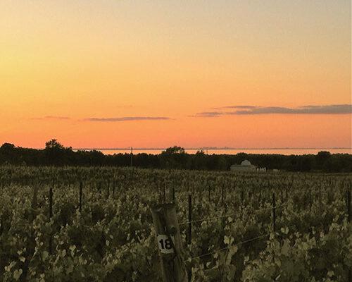cavespring-vineyard-estate-house-view