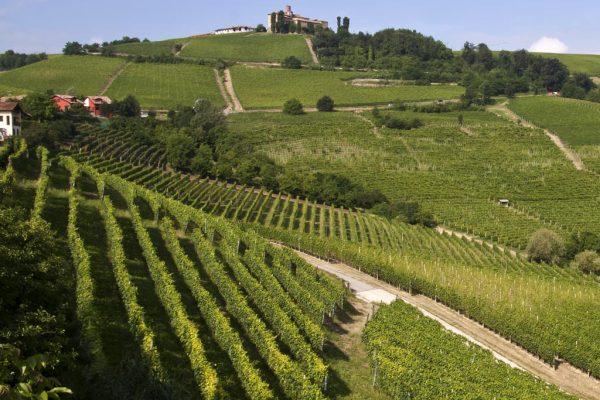 vineyard.context