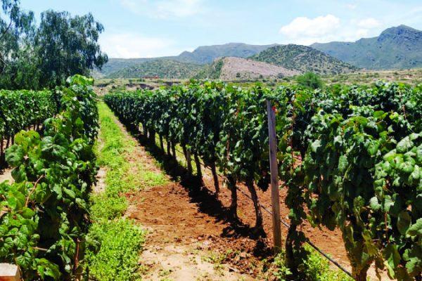vinos-aranjuex
